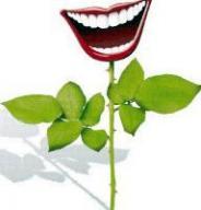 www.mariegraindesel.fr_printps-sourire